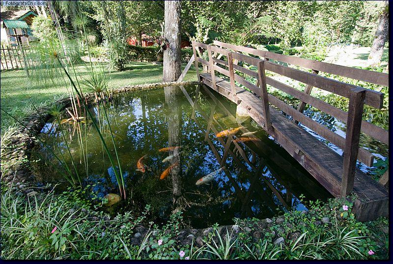 E Lago Com Peixes Ornamentais Atravessado Por Uma Romantica Ponte